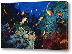 Постер Fish046