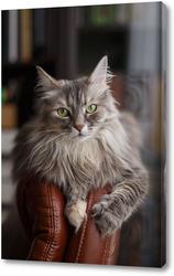 Кошка Дымка