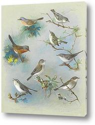 Постер Певчая птица и Крапивники