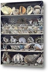 Коллекция раковин