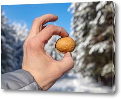 Постер Грецкий орех в руке человека