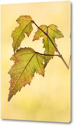 Постер Красивые осенние листья
