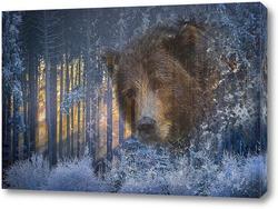 Постер Взгляд медведя