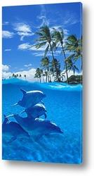 Постер Dolphin079