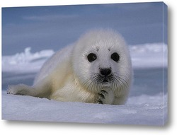 Постер Seal012