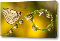 Постер Бабочка на стебле с капельками