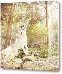 Постер Белоснежный волк