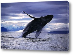 Постер Whale028