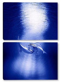 Модульная картина Dolphin071