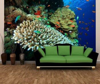 Фотообои Coral-05011034