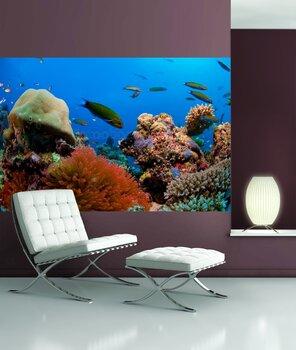 Фотообои Гора кораллов в Красном море