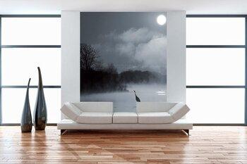 Фотообои Журавль в тумане